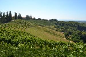Les collines viticoles de Jeruzalem