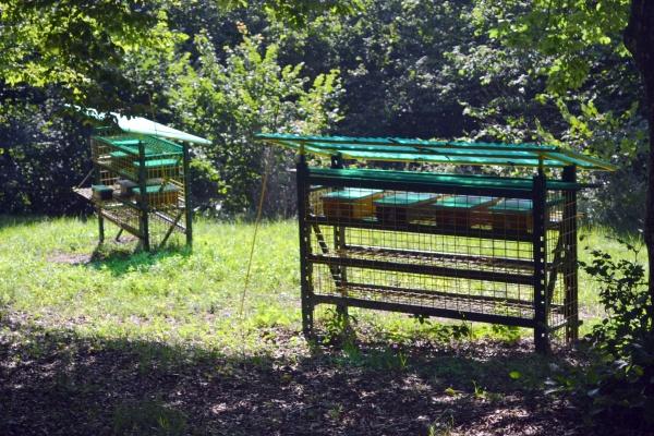 Protection contre les ours des ruchettes de fécondation