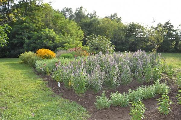 Le jardin de fleurs méllifères