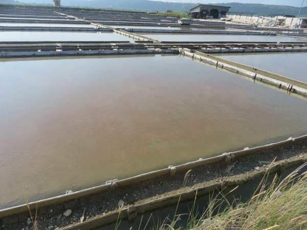 Les paludiers Slovènes sont en partenariat avec les producteurs de sel de Guérande et testent de nouvelles techniques en ensemençant leurs bassins avec des algues originaires des marais salants de Charente.