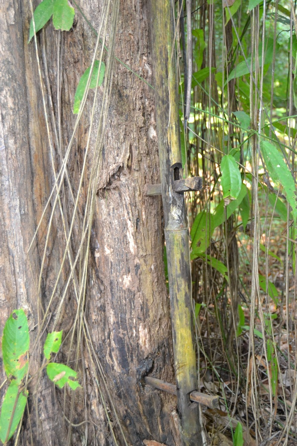 Détails de la fixation du bambou sur le tronc