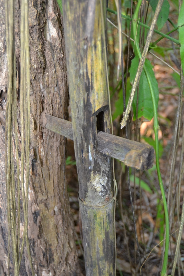 """""""Clou en bambou"""""""
