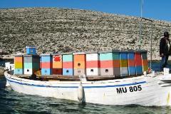 Transhumance sur les iles Kornati
