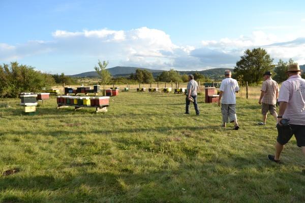 Le rucher d'élevage de reines