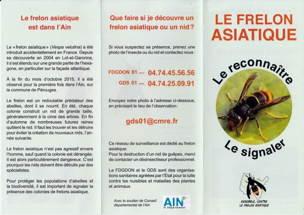 Flyer frelon asiatique recto