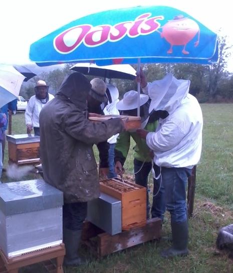 Second traitement à l'acide oxalique sous une pluie battante au rucher de Béard