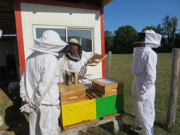 Présentation de la ruche éleveuse aux vétérinaires